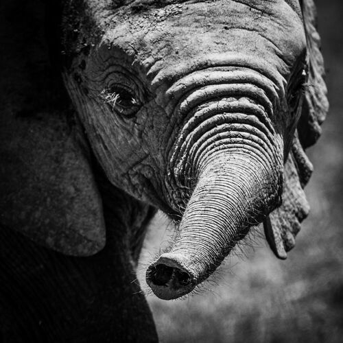 LE TROMPETTISTE - LAURENT BAHEUX - Photograph