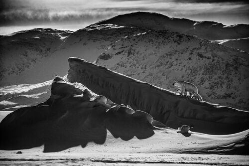 LIFE ON ICE I - LAURENT BAHEUX - Photograph