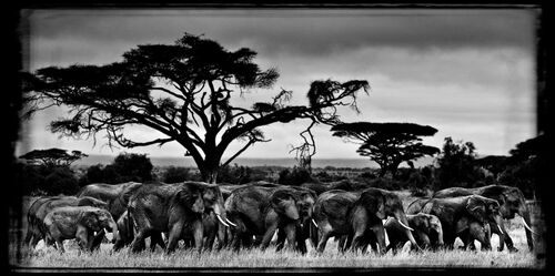 MARCHE DES ÉLÉPHANTS - LAURENT BAHEUX - Photograph