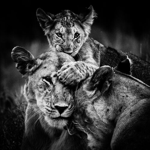 MORDU DAMOUR - LAURENT BAHEUX - Photograph