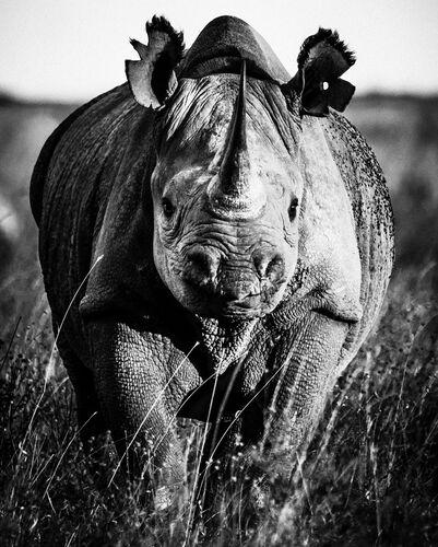 PREHISTO RHINO - LAURENT BAHEUX - Photographie