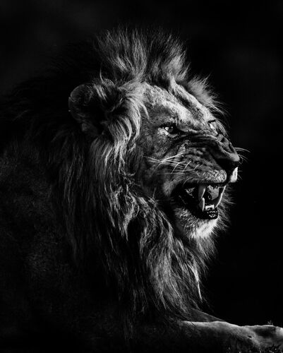 SMILE OR DIE - LAURENT BAHEUX - Kunstfoto