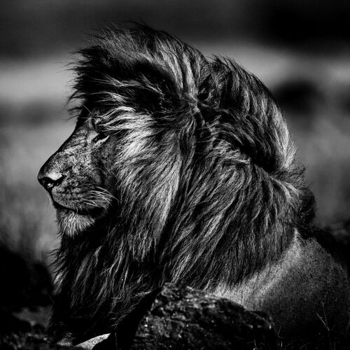 SUN ON MY FACE - LAURENT BAHEUX - Kunstfoto