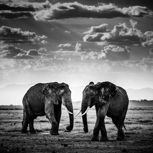 THE ROAD IS CLOSED, KENYA 2015 - LAURENT BAHEUX - Photograph