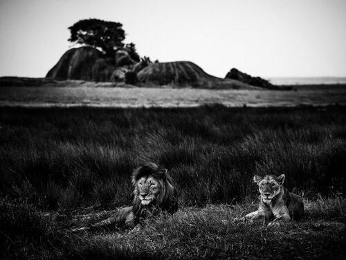 THE ROYAL COUPLE - LAURENT BAHEUX - Kunstfoto