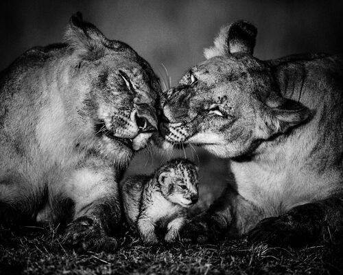 The small one - LAURENT BAHEUX - Kunstfoto