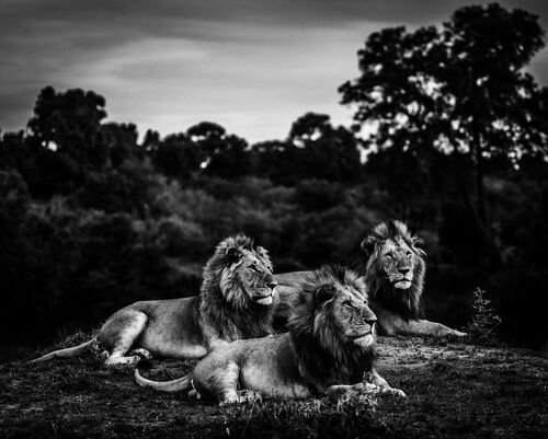 THREE BROTHERS AFTER SUNSET - LAURENT BAHEUX - Kunstfoto