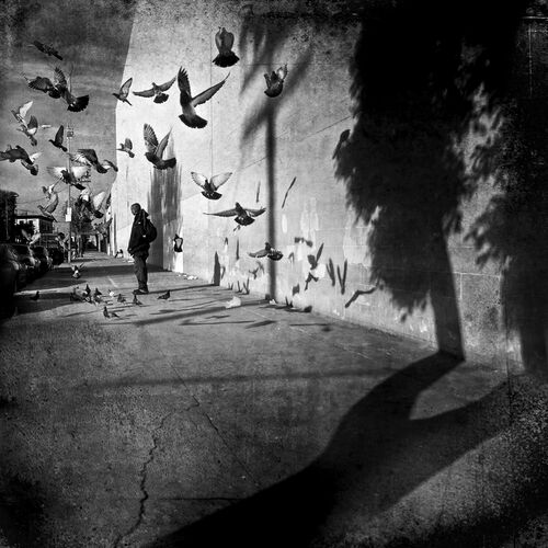 PIGEONS & SHADOWS - LEE JEFFRIES - Photograph