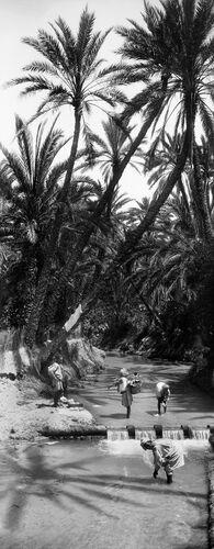 OUED OASIS SUD DU SAHARA ALGÉRIEN I -  LEON ET LEVY - Photograph