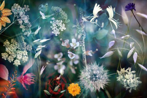 Season I - LUIS MARIANO GONZALEZ - Kunstfoto