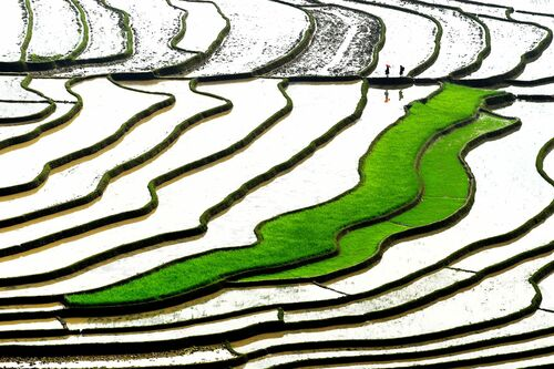 GREEN STEPS - LY HOANG  LONG - Kunstfoto