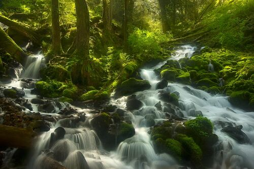 Enchanted Forest Columbia Gorge Oregon - MARC ADAMUS - Photograph