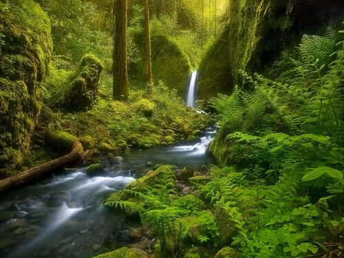 Fairyland Falls Columbia Gorge Oregon - MARC ADAMUS - Photograph