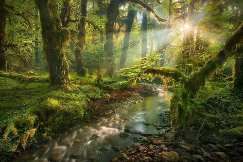 Spirit Garden Queets Rainforest Washington - MARC ADAMUS - Kunstfoto