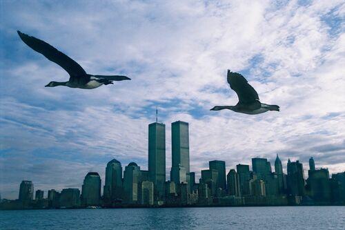 Twin Towers - Le peuple migrateur - MATHIEU SIMONET - Fotografia