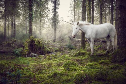 THE LAST UNICORN 1