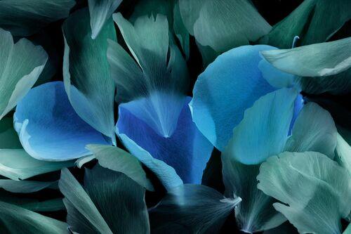 Pétales de roses - MICHEL GANTNER - Fotografia