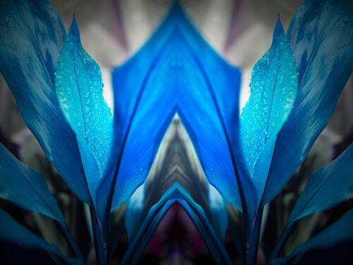 Blue Arch - NICOLAS JARDRY - Fotografia