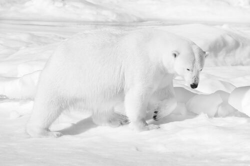 Arctic star - NOLWENN HADET - Photograph