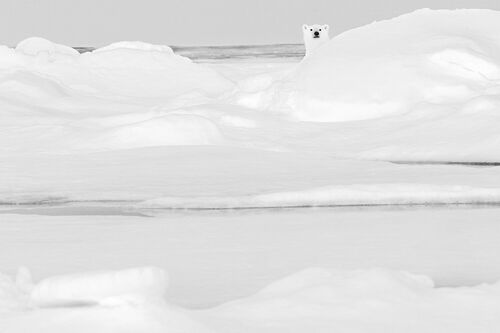SEUL DANS LA GLACE - NOLWENN HADET - Photograph