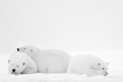 SLEEPING FAMILY - NOLWENN HADET - Photograph