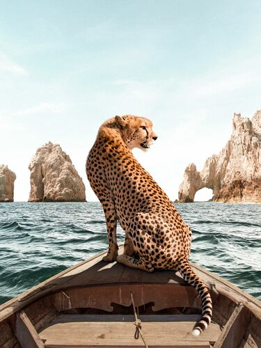 LOS CABOS - PAUL FUENTES - Photograph