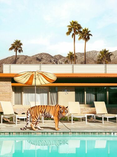 POOLSIDE TIGER - PAUL FUENTES - Photograph