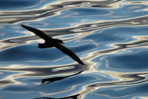 REFLETS MELES - PAUL TIXIER - Fotografia