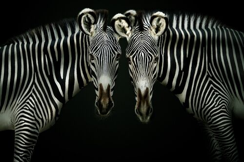 DOUBLE TROUBLE - PEDRO JARQUE KREBS - Photograph
