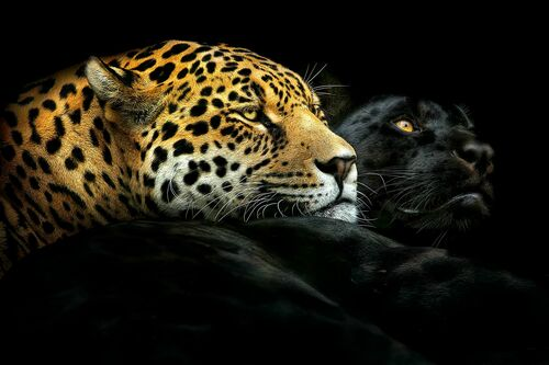 EBONY AND IVORY - PEDRO JARQUE KREBS - Photographie