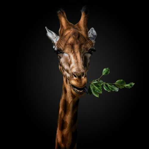 WANNA SOME GRASS - PEDRO JARQUE KREBS - Photograph