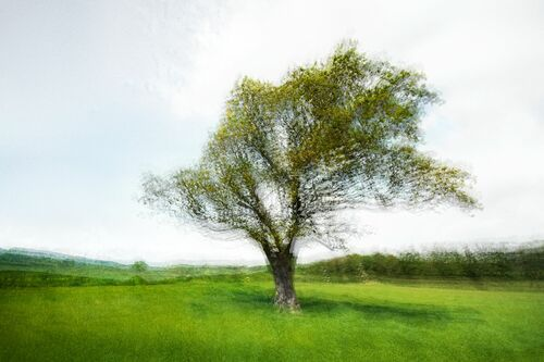 LANDSCAPE AND TREE III - PETER MADSEN - Fotografia