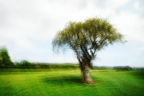 LANDSCAPE AND TREE V - PETER MADSEN - Photograph