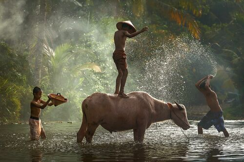 TAKING SHOWER WITH BUFFALO - RARINDRA PRAKARSA - Kunstfoto