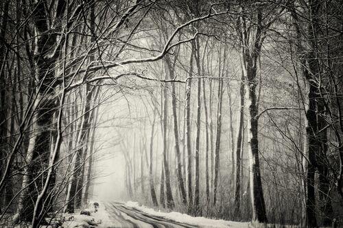 Forest in snow - Robert Peek - Fotografie