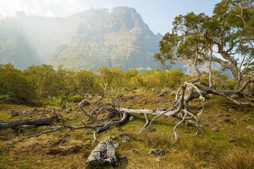 Plaine des Tamarins I Cirque de Mafate Île de la Réunion - RODIGER VOGEL - Photograph