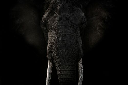 SHADOW TUSK - RODNEY BURSIEL - Photograph