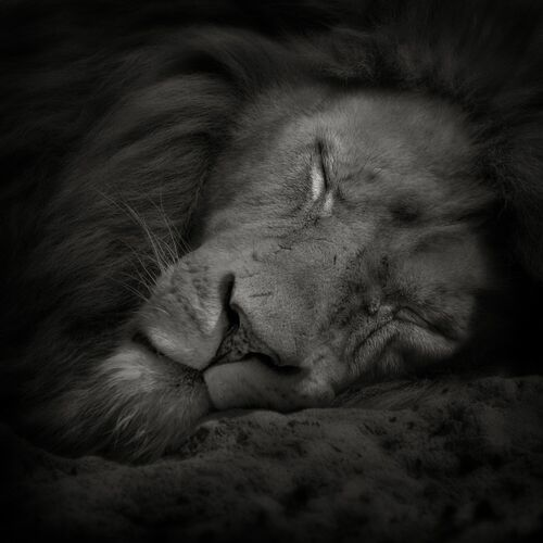 Sweet Dreams - RUUD PETERS - Photograph