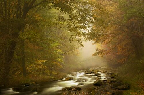 AUTUMN DREAM - SAPNA REDDY - Photograph