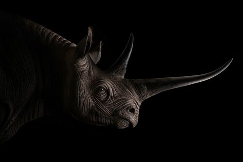 BLACK RHINO -  SAREL AND MARYNA - Photograph
