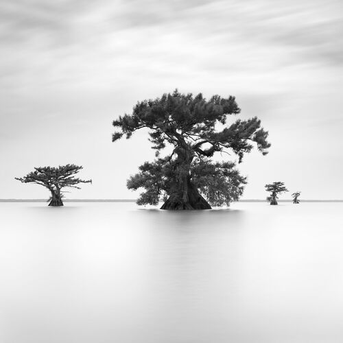 GUARDIANS OF ORACLE IV - SEBASTIEN GREBILLE - Fotografia