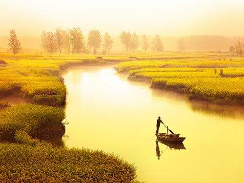 River of rapeseed - THIERRY BORNIER - Photographie