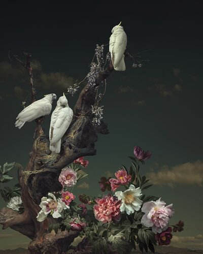 THREE WHITE BIRDS - YANG BIN - Kunstfoto