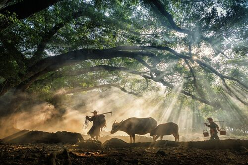 Going To The Farm - Zay Yar Lin - Photographie