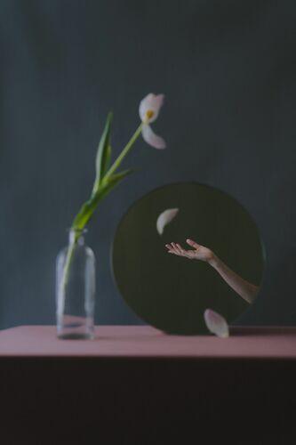 DANCING TULIP - ZIQIAN LIU - Photograph