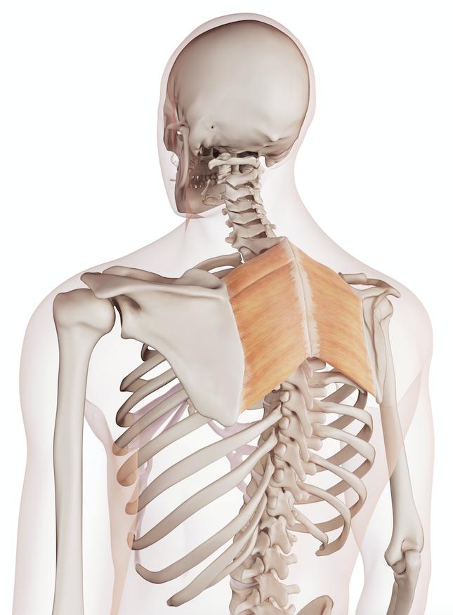 Your Pilates Physio Blog Shoulder Impingement Your Pilates Physio
