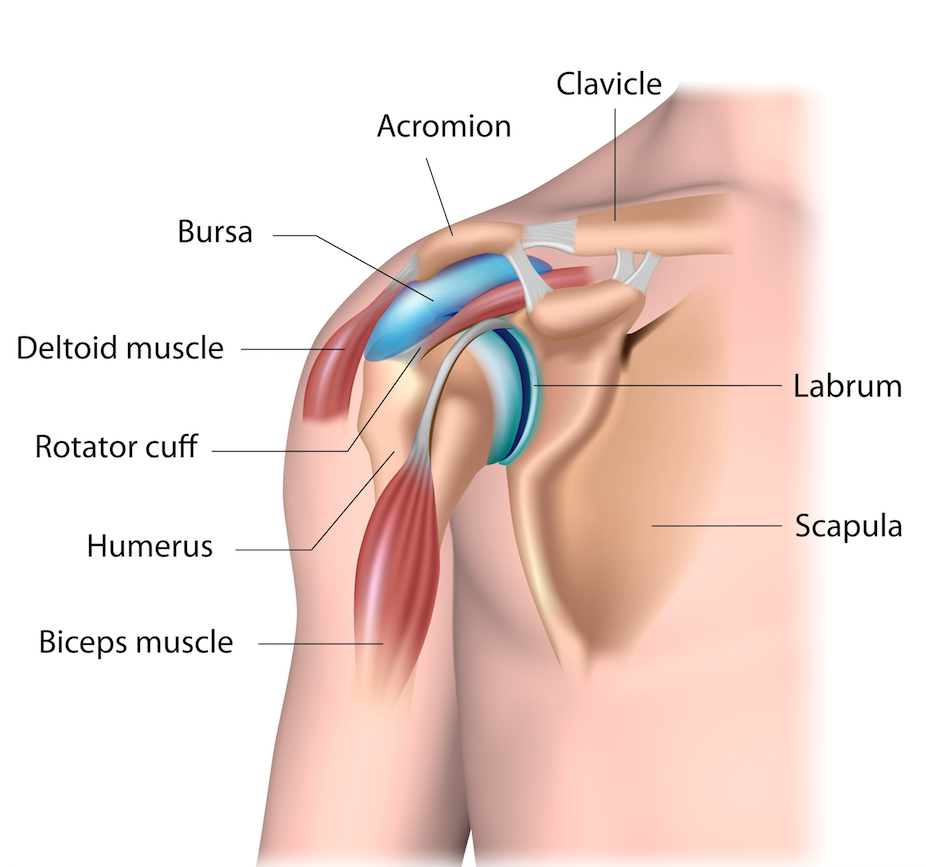 Your Pilates Physio | Blog | shoulder impingement | Your Pilates Physio