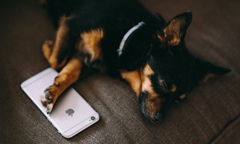 Al perrete le gusta la telefonía de Telmi
