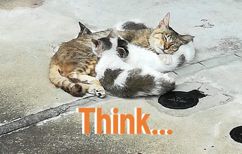 think_neko