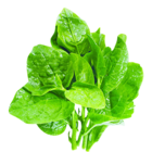Fresh Spinach (Palak) Bunch 1 pc